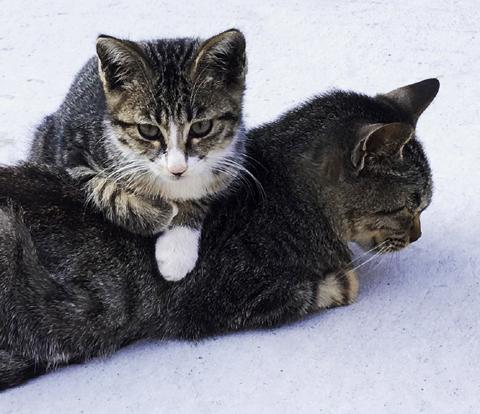 cat2-1011.jpg